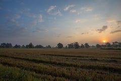 Alba nei campi della Tailandia Fotografia Stock Libera da Diritti