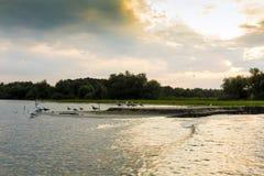 Alba nel delta di Danubio Fotografia Stock