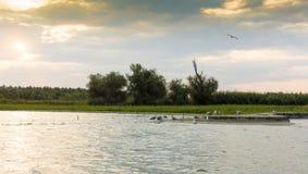 Alba nel delta di Danubio Fotografie Stock