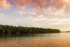 Alba nel delta di Danubio Immagine Stock Libera da Diritti