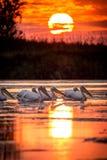 Alba nel delta Romania di Danubio Fotografia Stock