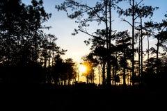 Alba nel parco nazionale di Phukradueng della foresta thailand Immagine Stock Libera da Diritti