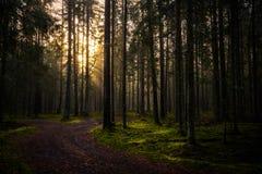 Alba nel parco nazionale & nel x22; Lakeland& x22 di Smolensk; Fotografia Stock