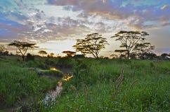 Alba nel Serengeti Immagini Stock Libere da Diritti