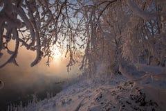 Alba nell'inverno Immagine Stock Libera da Diritti
