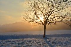 Alba nell'inverno con l'albero Immagini Stock Libere da Diritti