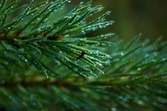 Alba nella foresta Fotografie Stock