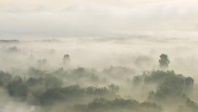 Alba nella foresta e nella nebbia Fotografia Stock