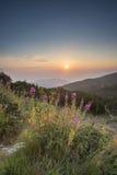 Alba nella montagna Fiori Fotografia Stock