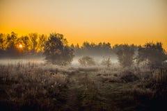 Alba nella nebbia della foresta Fotografia Stock