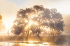 Alba nella nebbia un albero misterioso sul fiume Fotografia Stock