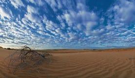 Alba nella sabbia del deserto Fotografia Stock