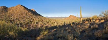 Alba nella sosta nazionale del Saguaro Fotografia Stock Libera da Diritti
