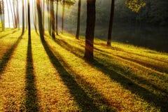Alba nelle foreste Fotografie Stock Libere da Diritti