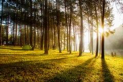 Alba nelle foreste Fotografia Stock