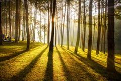 Alba nelle foreste Fotografie Stock