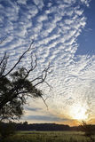 Alba, nuvole, campo Fotografia Stock Libera da Diritti
