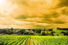 Alba-paesaggi della vigna Fotografie Stock