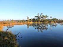 Alba in palude vicino al lago, Lituania fotografia stock
