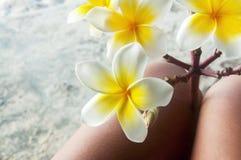 alba plumeria Το λουλούδι του Βούδα αυξάνεται στην Ασία Στοκ Φωτογραφίες