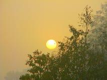 Alba, ramo di albero contro lo sfondo del sole Fotografie Stock