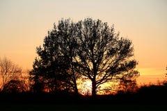 Alba romantica dietro un grande albero fotografie stock libere da diritti
