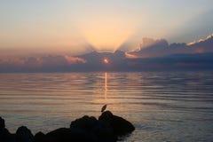 Alba rosa che riflette sulla spiaggia con un uccello Fotografie Stock