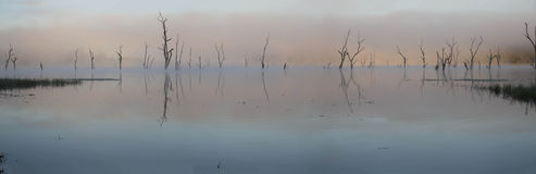 Alba rosa nel lago Tinaroo Fotografia Stock