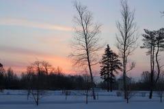 Alba rosa un giorno di inverno gelido Immagini Stock