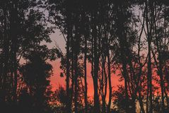 Alba rossa meravigliosa fra silouet degli alberi fotografie stock