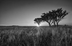 Alba senza nuvole fredda di mattina con gli alberi, l'erba e la nebbia in arti Fotografie Stock