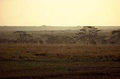 Alba Serengeti, Tanzania Immagine Stock Libera da Diritti
