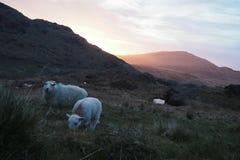 Alba Snowdonia Fotografia Stock Libera da Diritti