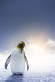 Alba sola del pinguino dell'imperatore fotografie stock