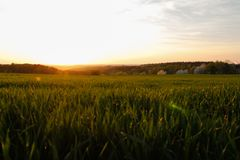 Alba soleggiata della campagna, campi verdi e prati Cieli blu immagini stock