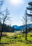Alba sopra gli alberi colpiti dalla siccità lungo un prato Fotografia Stock