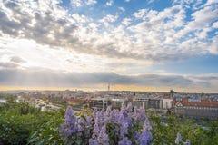 Alba sopra i fiori della città e del lillà di Praga immagine stock