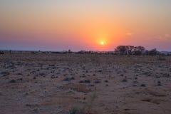 Alba sopra il deserto di Namib, roadtrip nel parco nazionale meraviglioso di Namib Naukluft, destinazione di viaggio in Namibia,  Fotografia Stock