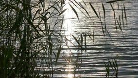 Alba sopra il fiume ed il Reed archivi video