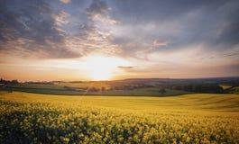 Alba sopra il giacimento di fioritura del seme di ravizzone alla primavera fotografia stock libera da diritti