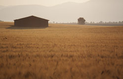 Alba sopra il giacimento di grano e la casa sola immagini stock libere da diritti