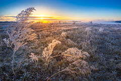 Alba sopra il prato con erba coperta di gelo Fotografia Stock Libera da Diritti