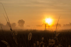 Alba sopra il prato sulla mattina nebbiosa Fotografie Stock