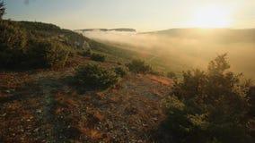 Alba sopra la collina con gli alberi del ginepro stock footage