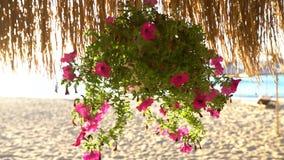 Alba sopra la spiaggia ed il parasole tropicali Fiori sotto l'ombrello archivi video