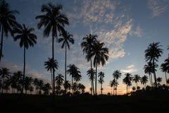 Alba sopra le palme a Phuket Fotografie Stock