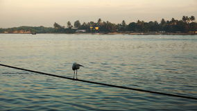 Alba sopra le reti da pesca e la barca cinesi a Cochin, India stock footage