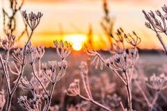 Alba sopra un campo congelato Fotografie Stock Libere da Diritti