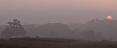 Alba sopra una riga di albero di mattina foschia immagine stock