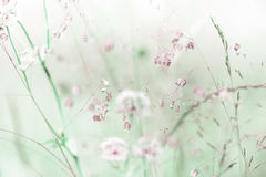 Alba stupefacente al prato di estate con i wildflowers Fotografia Stock